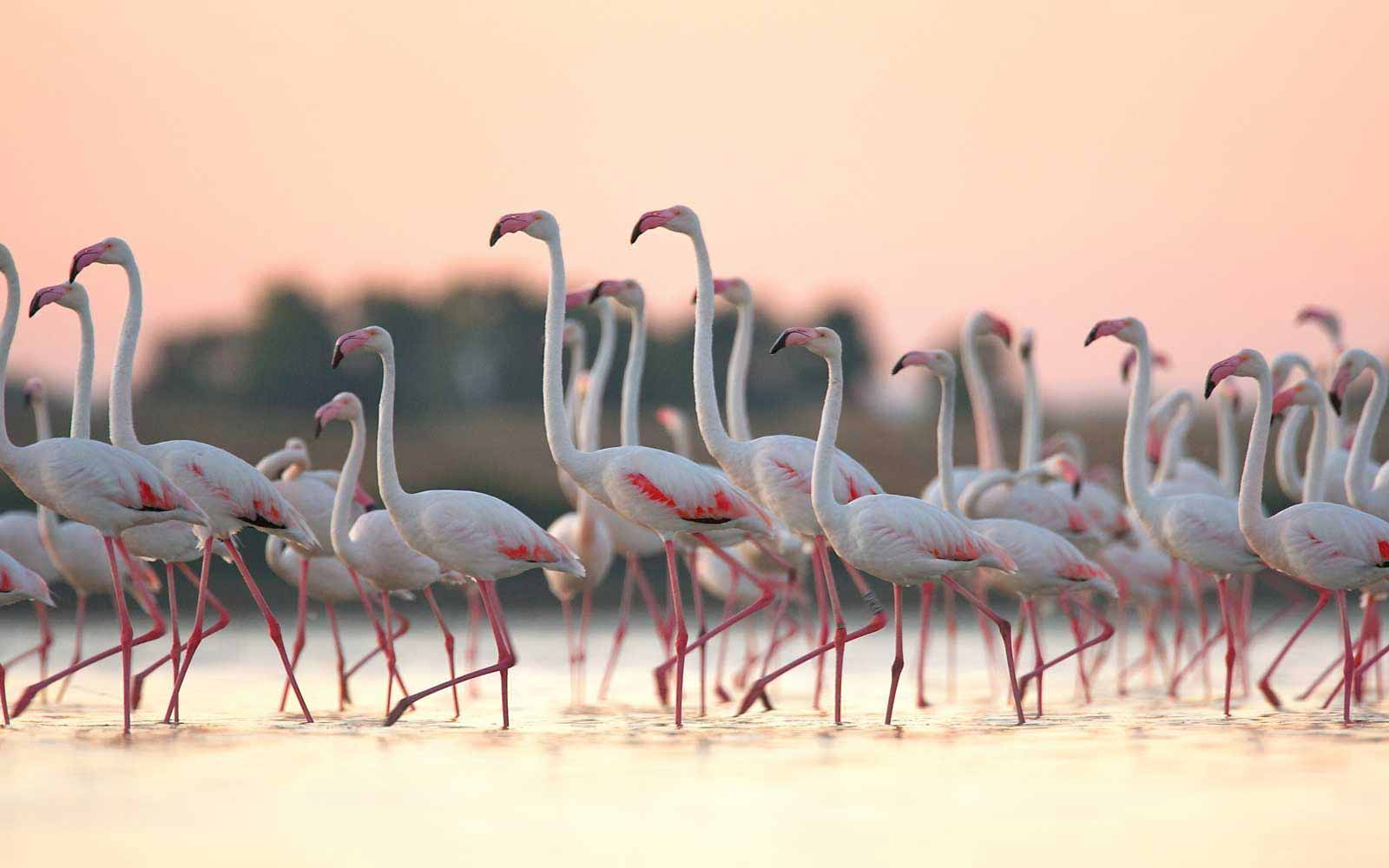 Flamingos can be found very close to the Is Benas Country Lodge