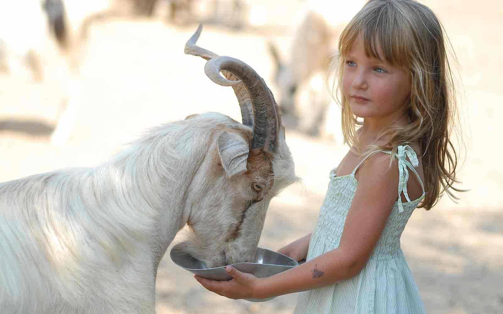 Feeding animals at Arbatax Park Resort