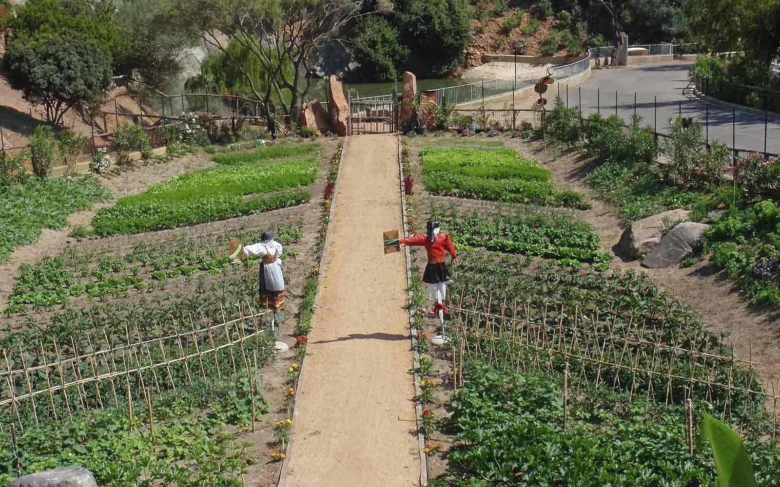 Vegetable patch at Arbatax Park Resort