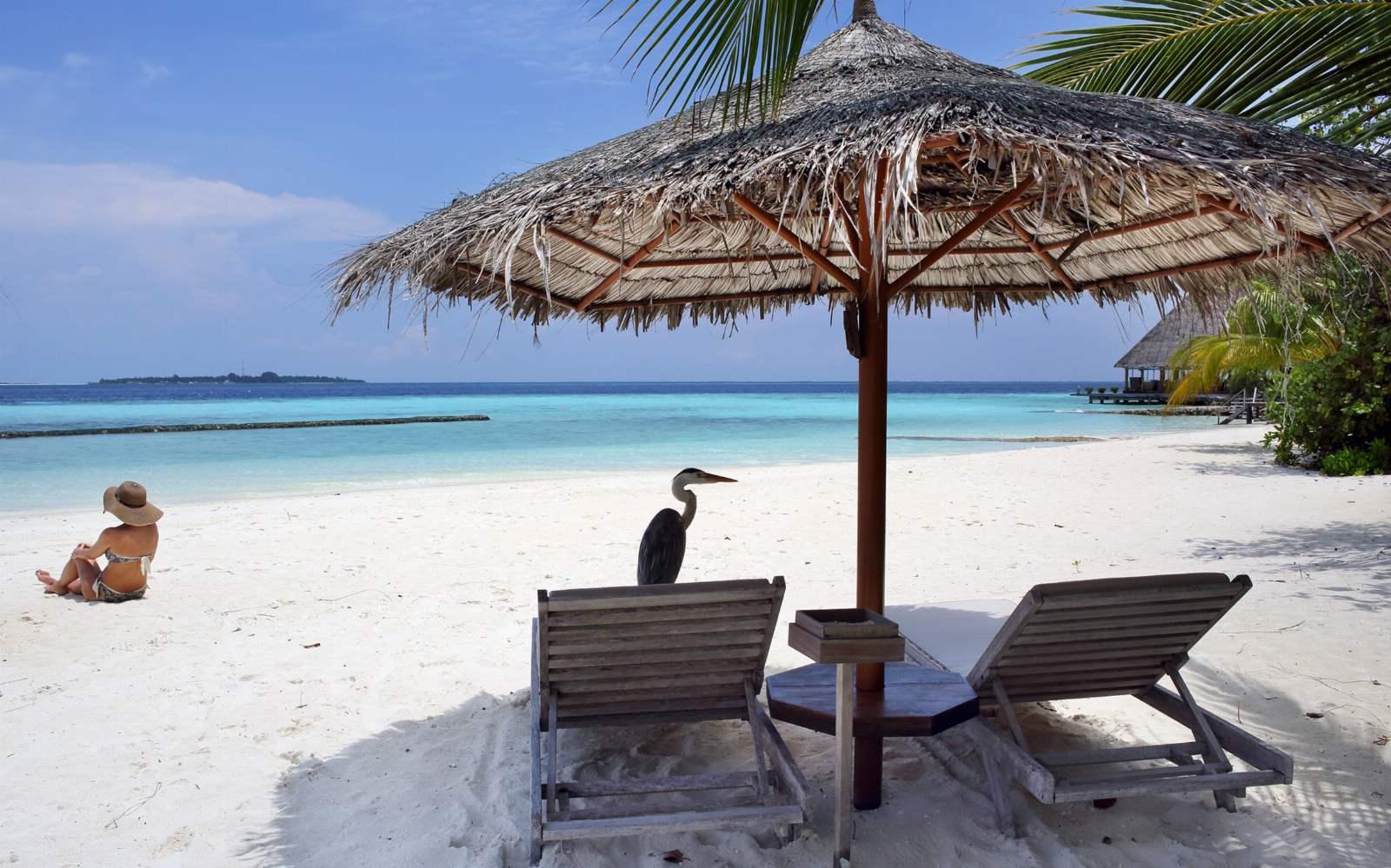 Beach at Gangehi Resort